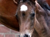 pferd12_gr