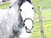 pferd4_gr