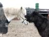 pferd6_gr