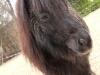 pferd9_gr